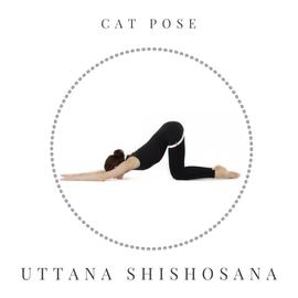 Cat pose - Uttana Shishosana