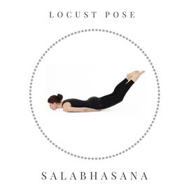 Locust pose - Salabhasana