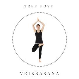 Tree pose - Vriksasana